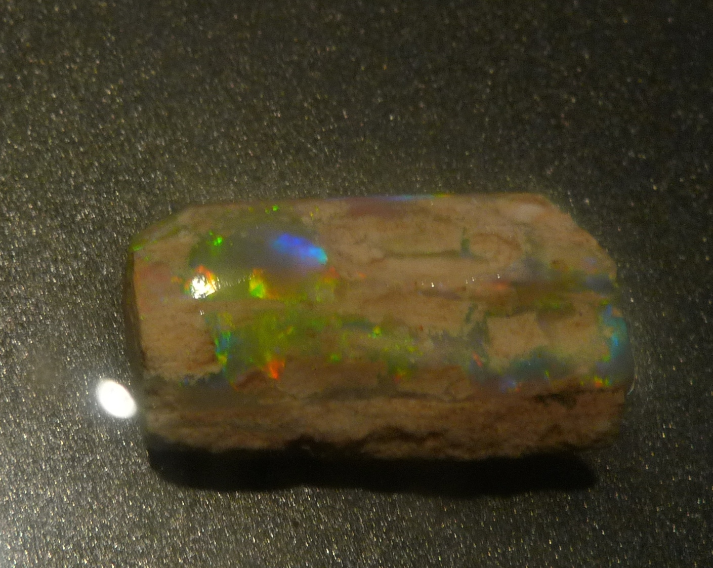 Lightning Ridge Fossils-Opalized Wood showing Gem Opal Colours